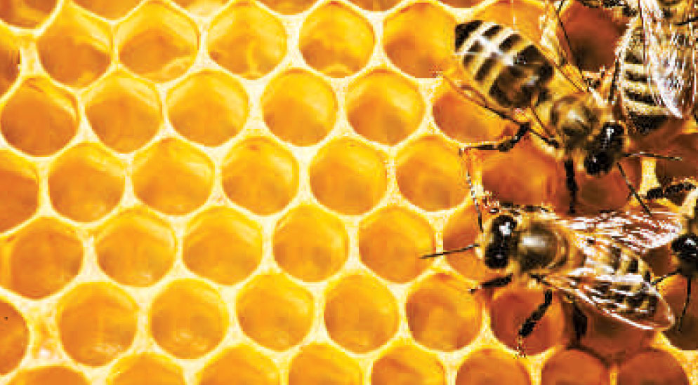 Death knell for honey bee