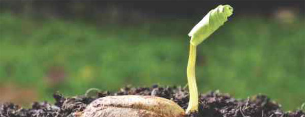 Plant the seeds for life