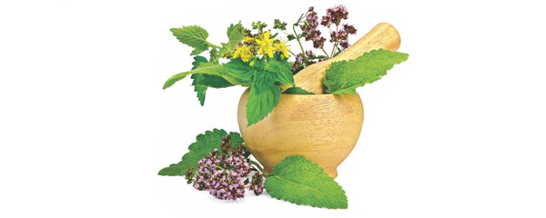 Remembering our Roots  to Protect Herbal Heritage