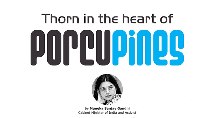 Thorn in the heart of Porcupines