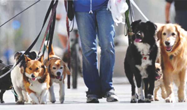 When Young people join dog walking companies