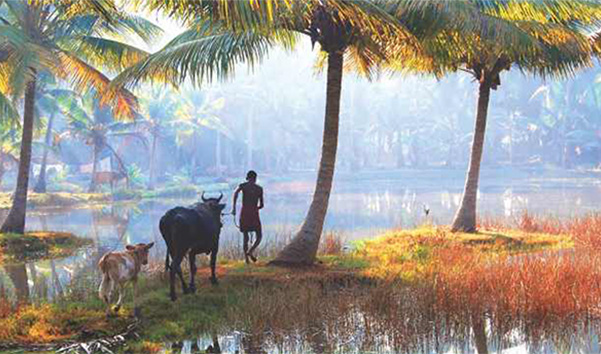 Promote Kerala tourism in a responsible manner