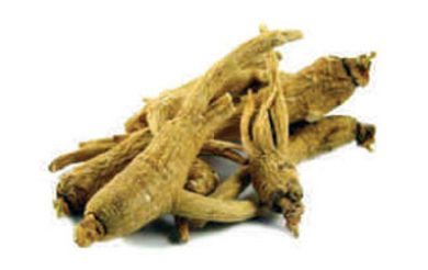 Booti Of The Month : Panax Ginseng