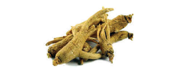 Ayurvedsutra Issue 6 Winter Special072 copy - Booti Of The Month : Panax Ginseng