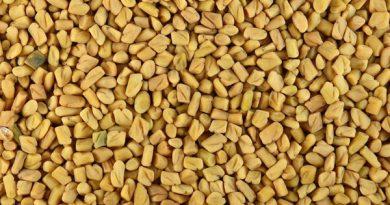 Fenugreek seeds 390x205 - Fenugreek Wonders