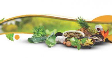 Ayurvedsutra Vol 2 Issue 343 390x205 - Plants of Arogyashram & their healing powers