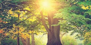 Meditation: Promoting Balanced Health