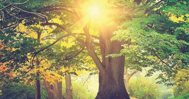 Ayurvedsutra Vol 04 issue 10 33 390x205 - Meditation: Promoting Balanced Health