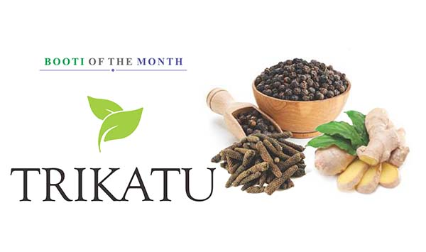 Ayurvedsutra Vol 05 issue 01 02 87 A - Booti of the Month : Trikatu