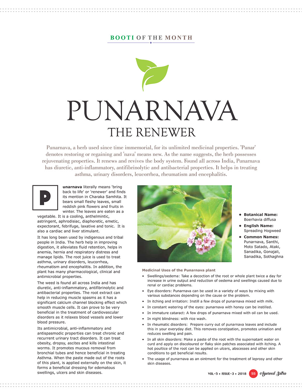 Ayurvedsutra Vol 05 issue 03 57 - Booti of the Month : Punarnava