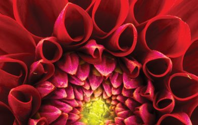 Alternative Healing Therapies:  A way towards Health