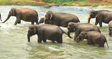 Ayurvedsutra Vol 05 issue 09 10 67 390x205 - Sri Lanka: A Perfect Getaway