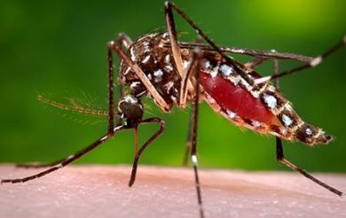 Ayush treatment management in dengue is simple and effective