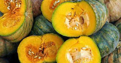 pumpkin 390x205 - Pumpkin Festival helps struggling farmers, Ayurveda shares its responsibility