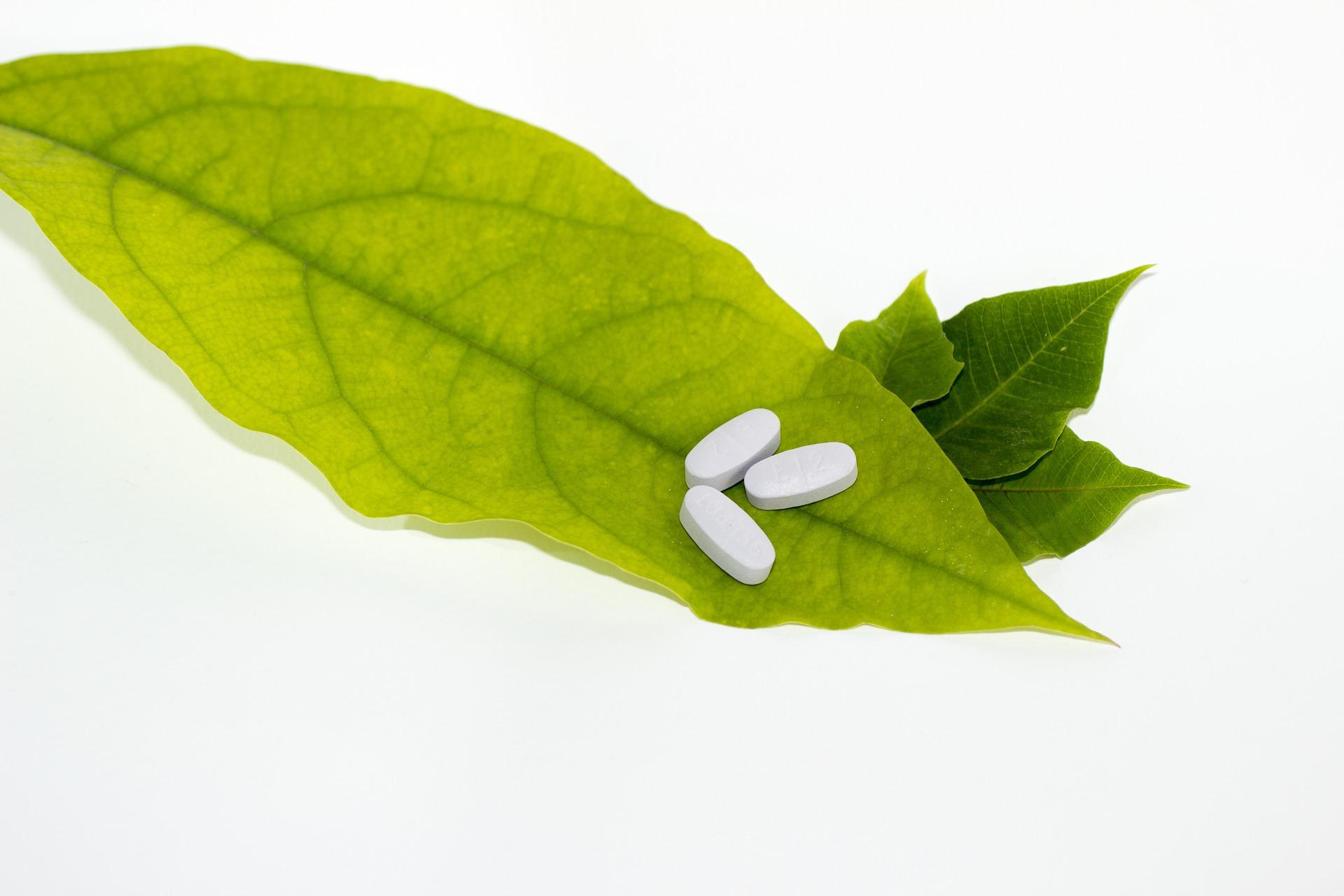 leaf 681122 1920 - 'Crosspathy'  allowing BAMS graduates to prescribe  drugs of modern medicine is 'Statutory Quackery' :IMA