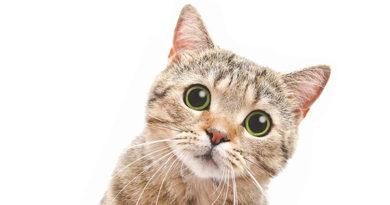 Ayurvedsutra Vol 06 issue 07 31 390x205 - Billo ki Daadi *Grandma' of the kitten