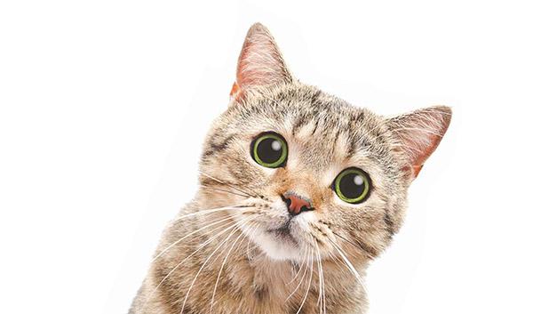 Ayurvedsutra Vol 06 issue 07 31 - Billo ki Daadi *Grandma' of the kitten